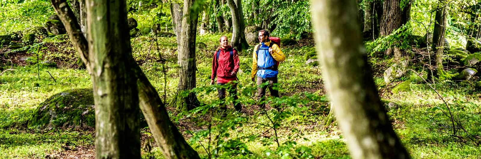 Colourfully dressed hikers in the woods
