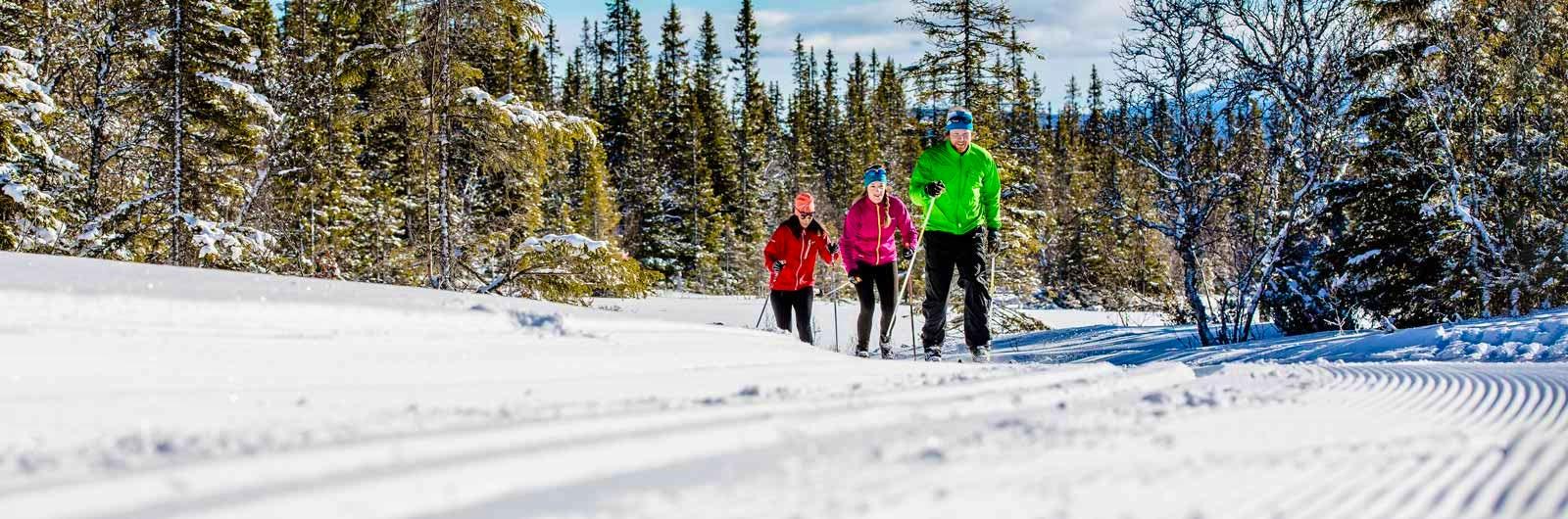 Cross-country skiiers in winter sun