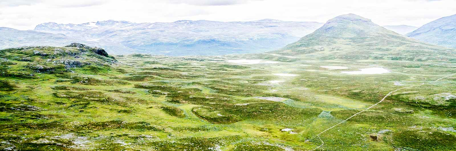 Abisko mountains looking lush in fog